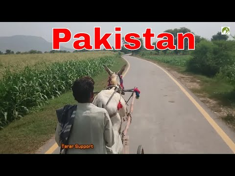 Pakistan Travel By Donkey
