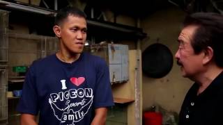 Alagang Magaling S6 EP11   LOFT VISIT TO THE WINNER IN MC ARTHUR RACE