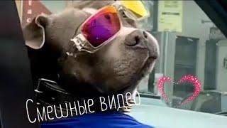 Подборка смешных видео Приколы с животными и людьми