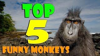 ТОП 5 Приколов 2015 с обезьянами. Лучшая подборка ТОП 5 свежих приколов апрель 2015 HD.