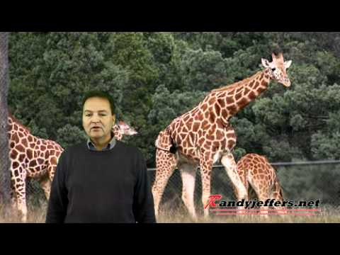 Thumbnail: Randy Jeffers - Baby Giraffe Gets Kicked by Mother