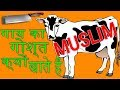 क्यों मुसलमान गाय का गोश्त खाते हैं   - Why do muslim eat cow meat