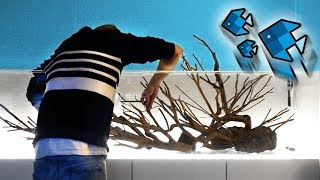 Das XXL Aquarium Layout! 😳