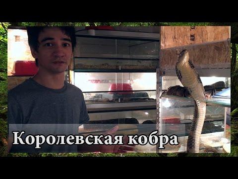 Официальный сайт / Алекс Бьюти Концепт