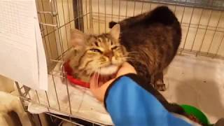 Лечение кота в стационаре