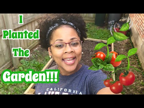 Planting A Vegetable Garden From Seeds | Organic Gardening