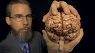 Massaging Your Brain (with Professor Clemmons) | ASMR