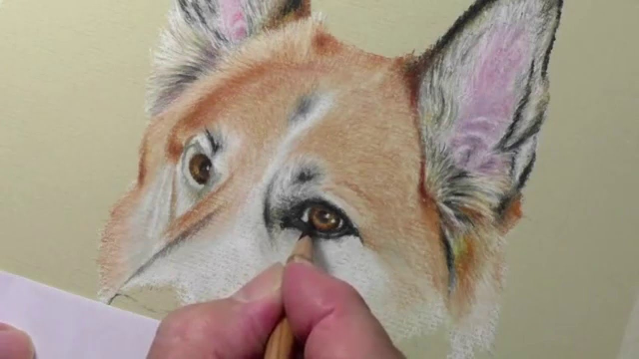 Food Art furthermore Craig together with Cloning Extinct Animals besides Channeling Mo moreover Golden Crowned Sifaka Lemur. on german shepherd drawings