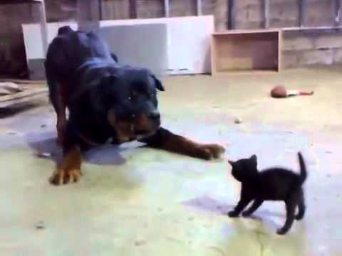 Funny Dog and Cat Fight ....!!!