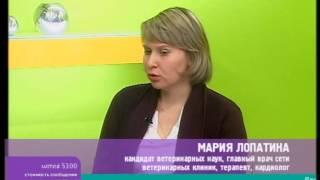 Сахарный диабет у кошек и собак  Мария Лопатина, ВК «Ветдоктор»