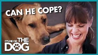 Anxious Dog Separated from Owners During Training | It's Me Or The Dog