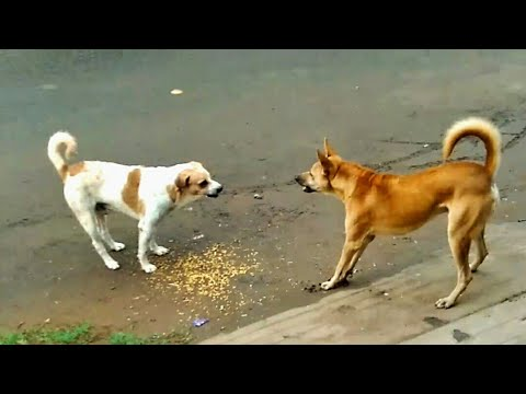 Dogs fighting action