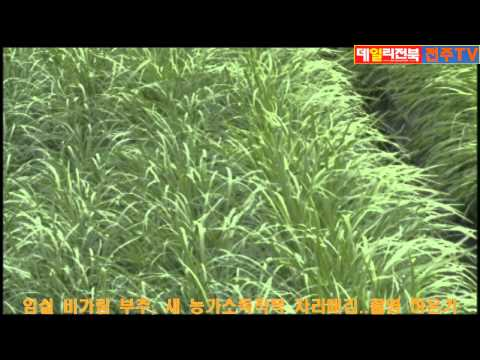 임실 비가림 부추, 새 농가소득작목 자리매김