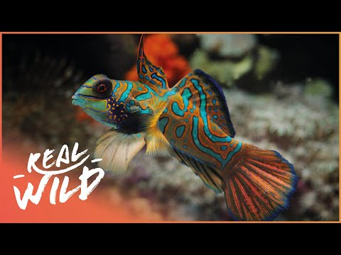 Alien Reefs [Coral Documentary] | Wild Things