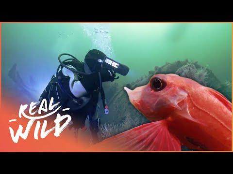 Alien Reefs [Coral