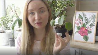 Комнатные растения / House plants / Создаю красоту вокруг себя Облагораживаю подоконник в подъезде