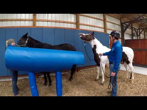Advanced Reproduction Services at Park Equine Hospital