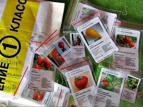 Семена. Семена томатов от коллекционера...