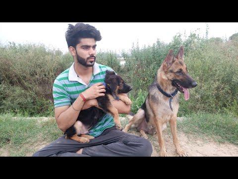 # VLOG - 3....Walk with my German Shepherds (jack and flexi)