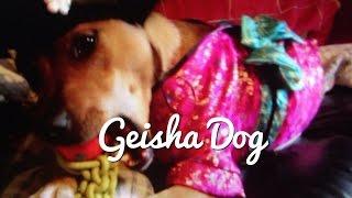 Geisha Dog from 9/5/14