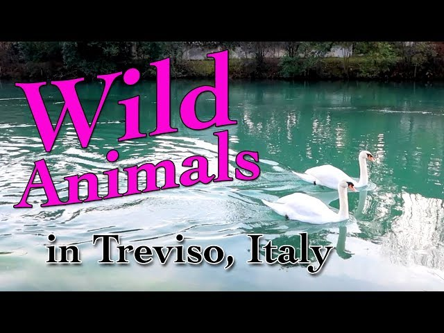 Wild Animals in Treviso, Italy