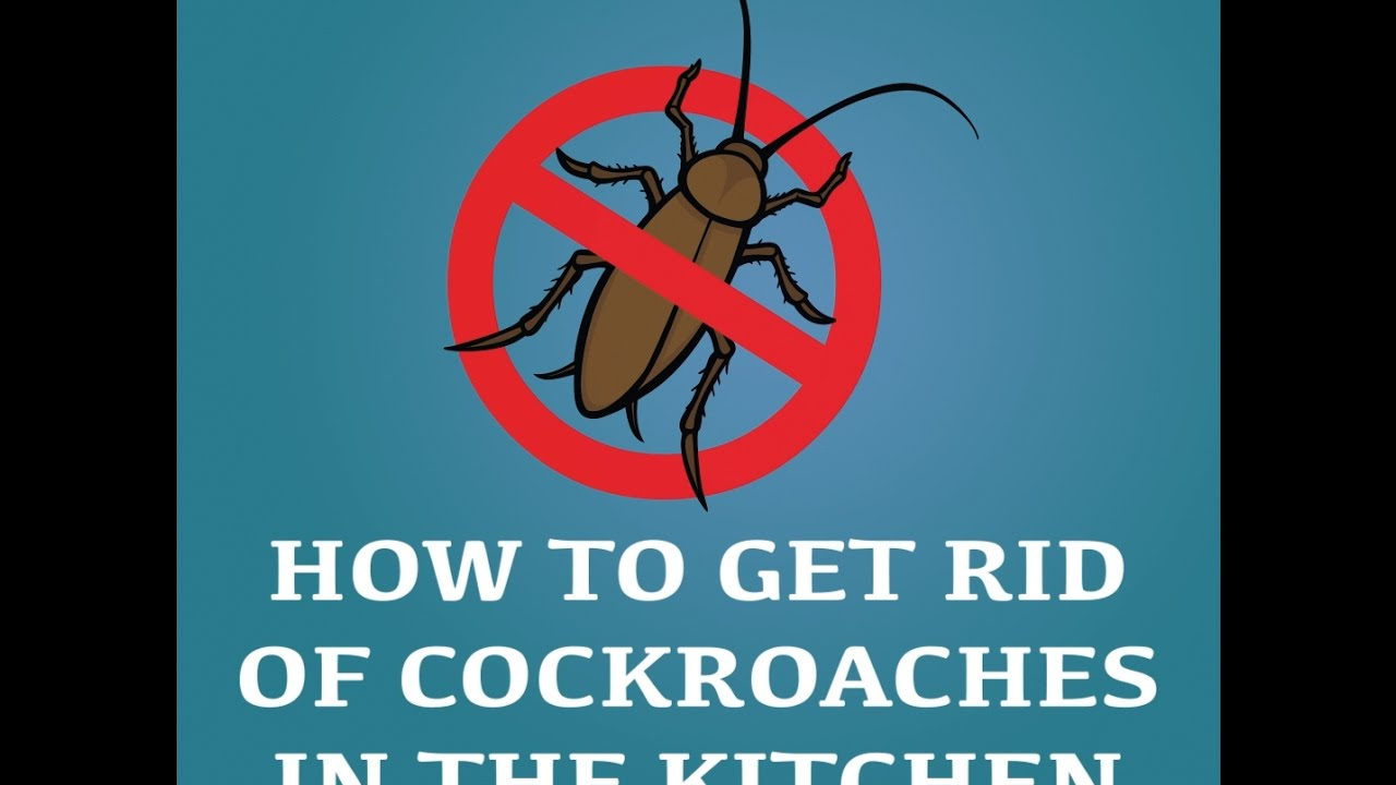 How to Get Rid of Cockroaches in the Kitchen - YouTube