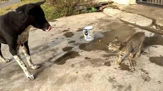 Cat vs Dog | Cat eats Dog Alive | Dog Eaten By Cat