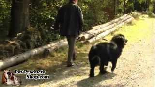 Petproductsshop.com - Patento Pet Dog-e-walk Basic Dog Trainers