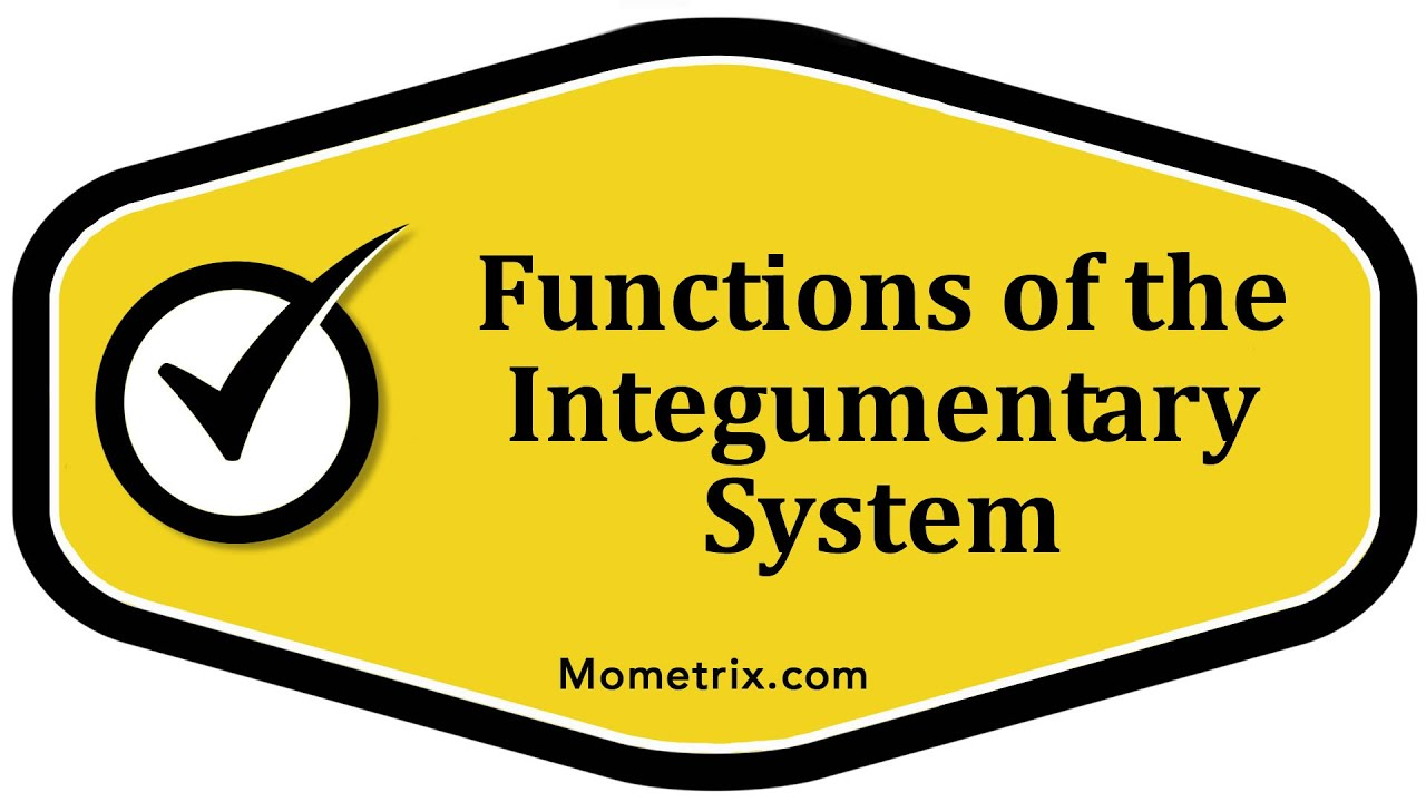 Functions Of The Integumentary System Youtube