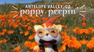 Poppy Peepin' in Antelope Valley