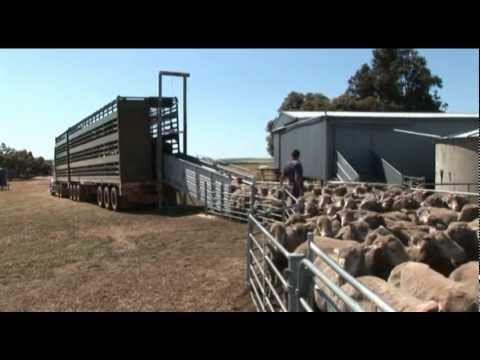 Australian Animal Welfare - Land Transport of Livestock