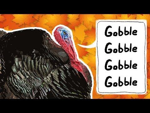 Turkeys for Kids | Wild Turkeys | Animals for Kids | Thanksgiving bird