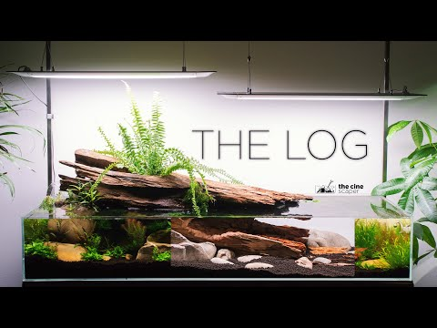 the-log---story-of-my-amazing-nature-aquarium-(aquascaping-tutorial)