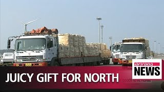 S. Korea sending Jeju tangerines to N. Korea in return for gift of pine mushrooms