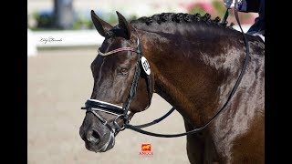 POETA DE SUSAETA - WORLD CHAMPIONSHIP FOR YOUNG HORSES-6 yo