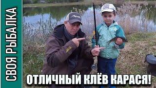 Рыбалка на карася в мае с сыном на пруду Отличный клёв