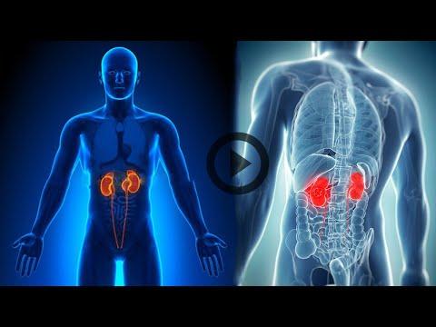 Заболевания почек: виды болезней, диагностика, лечение и профилактика