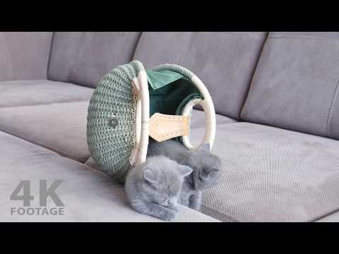 Cute Kittens Playing Together in a Bag, 29 Days - 4K footage