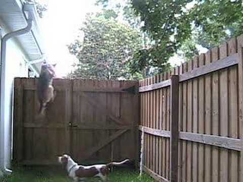 Watch My Dog Climb A Fence Youtube
