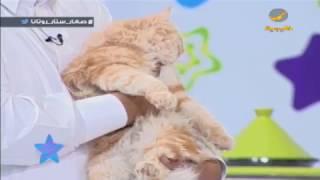الحيوانات الأليفة وطرق التعامل معها.. نصائح وإرشادات للأطفال من د. سعد العميري
