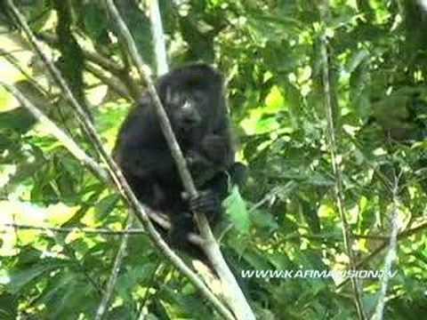 Belize's wildlife - Karmavision
