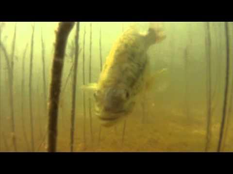 Monster Bass on Quail Creek Seg 3