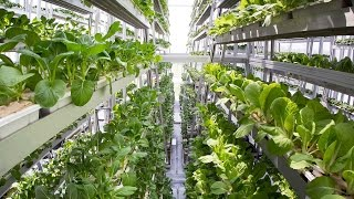 Father of Vertical Farming Answers: Can This Really Work?