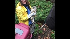 Owl Rescued at St. Paul's Hospital