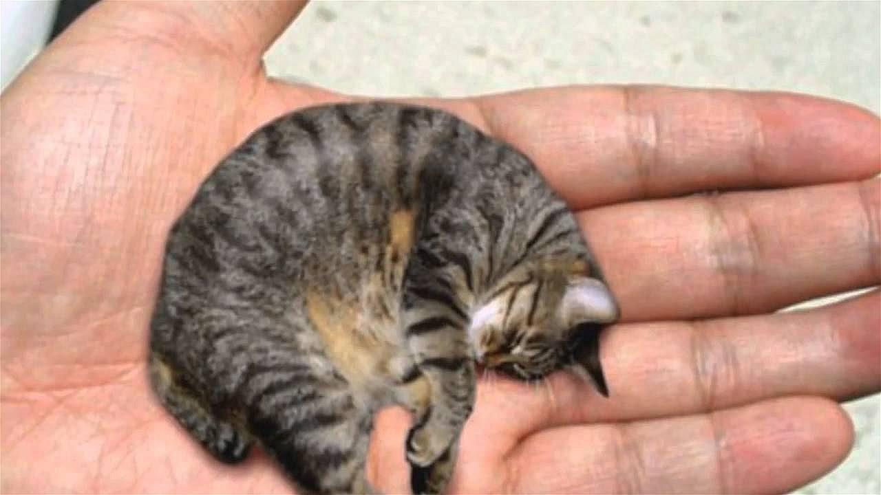 Kleinste Tiere Der Welt