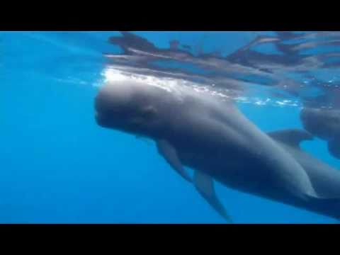 Dolphins and whales in the Mediterranean: Calahonda, Spain