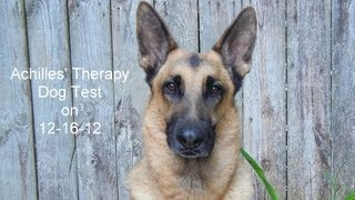 Achilles' Therapy Dog Test 12-16-12