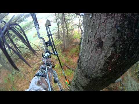 Vermont Coyote Kill 2012