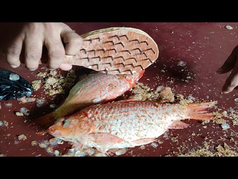 How To Make Fish Scaler Brush Made With Cardboard
