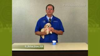 Petsolutions: Using Dog Dental Wipes For Dental Care